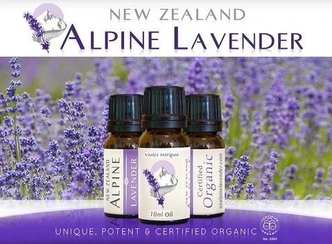 alpine-gold-lavender-oil